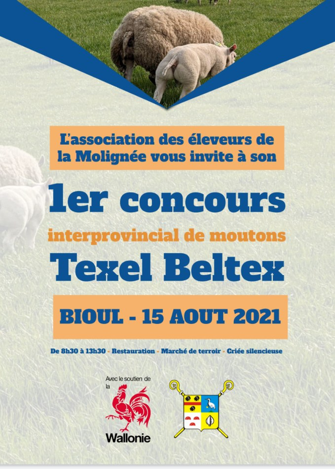 Concours mouton